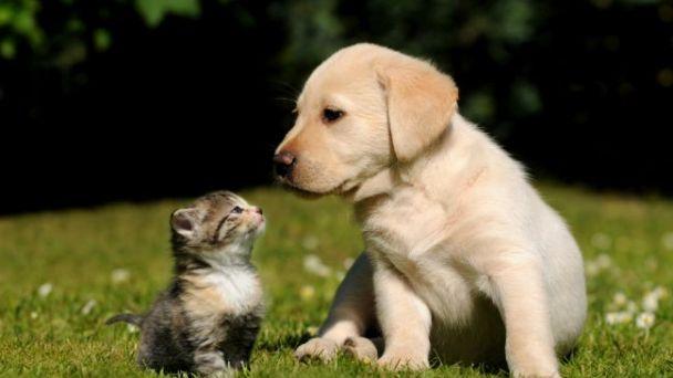 Vakcinácia psov a mačiek